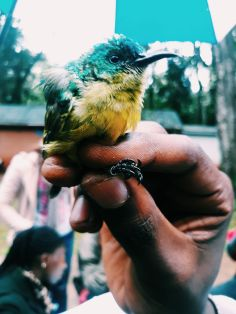 Bird Ringing with Arocha Kenya